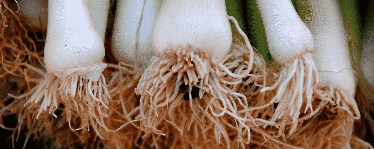 Ces légumes éternels (ou presque)