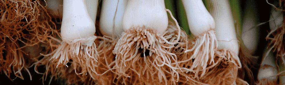 légumes perpétuels