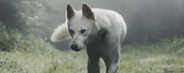 Tilou le loup (conte pour les enfants du nouveau monde)